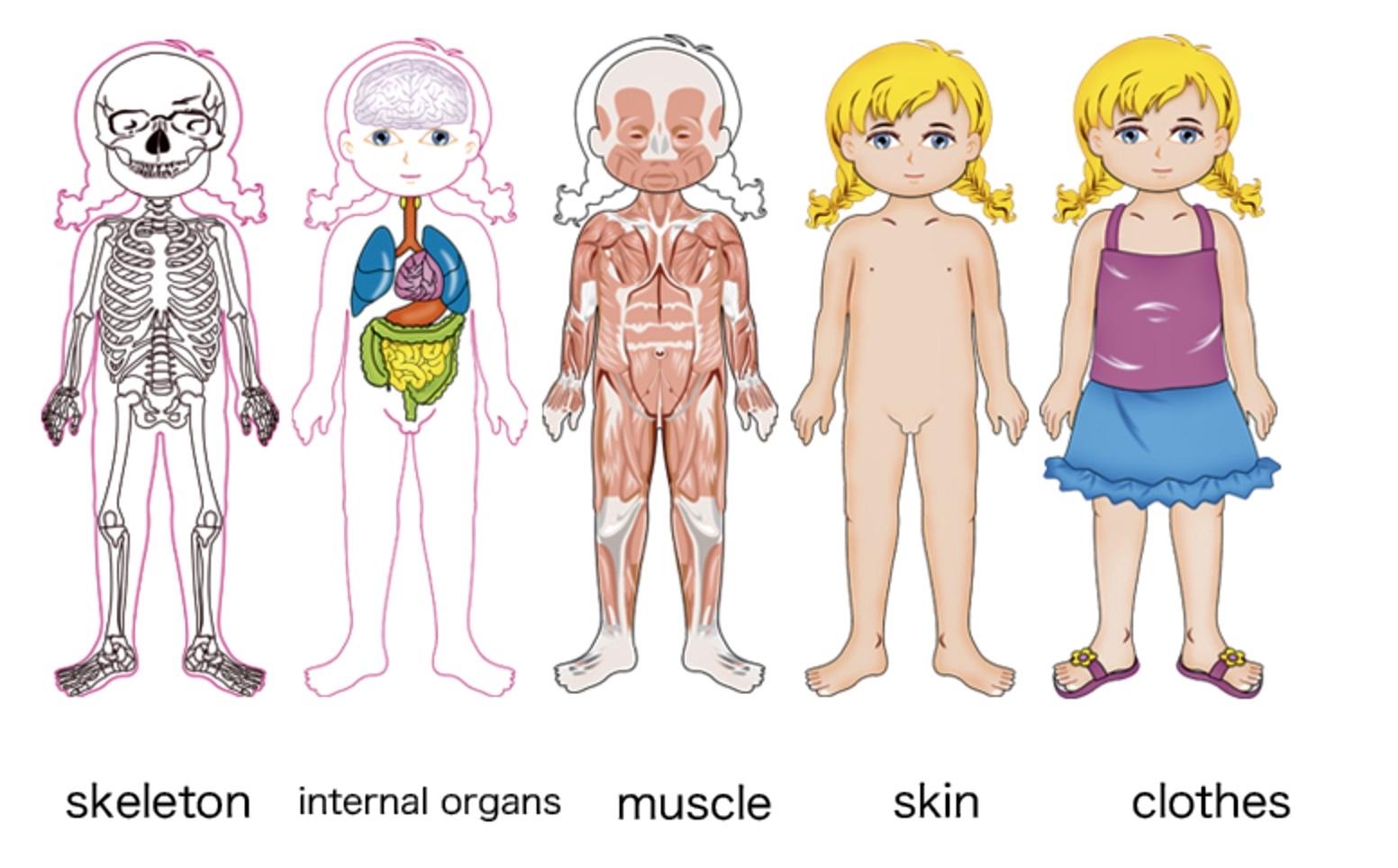 Puzzle Multistrat Corpul Uman Fata